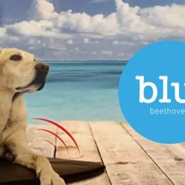 Magnetfeldtherapie - Tierarzt blu beethoven
