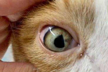 Neurologie - Tierarzt blu beethoven