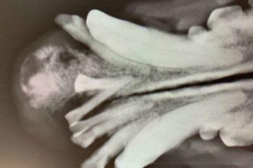 Tumoruntersuchung - Tierarzt blu beethoven