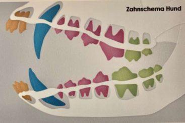 Zahnbehandlung - Tierarzt blu beethoven